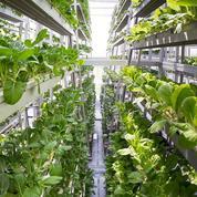 Les fermes verticales se multiplient à Singapour