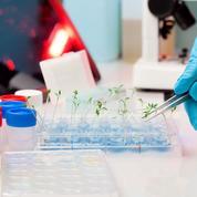 Trop de conflits d'intérêts dans la recherche sur les OGM ?