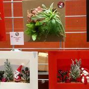 Boby La Plante, la boutique à la végétation dépolluante à Paris