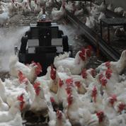 Octopus, le robot français qui veut (aussi) combattre la grippe aviaire