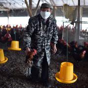 La Chine malade des antibiotiques