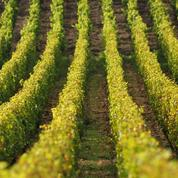 Un milliardaire américain affole les prix des vignes en Bourgogne