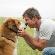 Maltraitance sur Mes vies de chien, le producteur se défend