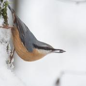 Participez au grand recensement des oiseaux des jardins