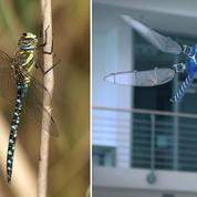 Ces inventions humaines inspirées par le génie de la Nature