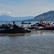 Spectaculaire et mystérieux échouage de baleines en Nouvelle-Zélande
