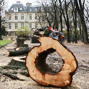 244 marronniers du Jardin du Luxembourg vont être abattus