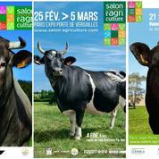La vache, star du Salon de l'Agriculture