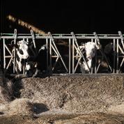 La location de terres, une astuce pour contourner (aussi) l'obstacle du foncier en agriculture