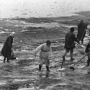 Torrey Canyon : il y a 50 ans, la première des marées noires