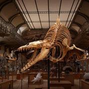 Le Cynthiacetus, méchant grand-père des baleines