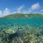 L'efficacité des aires marines protégées dépend de leur gestion