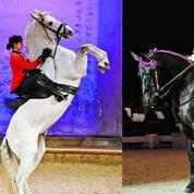 Leurs chevaux de bataille