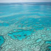 La Grande Barrière de corail menacée par le réchauffement
