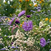 Comment faire fleurir votre jardin neuf mois sur douze