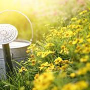 Des astuces pour jardiner sans (trop) arroser