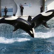 À terme, la captivité des dauphins et des orques sera interdite en France