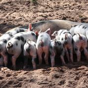 Cause animale: la grande manipulation affective de l'antispécisme