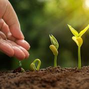 Légumes, fleurs: il est encore temps de semer pour l'été