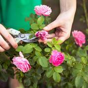 Fleurs: il est déjà temps de «toiletter» le jardin