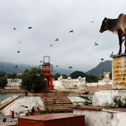 En interdisant l'abattage de bovins, l'Inde fragilise sa filière de viande
