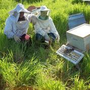 Algérie : comment les abeilles aident des femmes à créer leur emploi