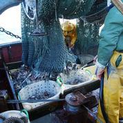Pêche: 10 millions de tonnes de poissons gaspillées chaque année