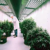 Le Canada débat de la fiscalité sur le cannabis