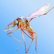Le moustique, cet ennemi mondial numéro un qui fait 750.000 morts par an