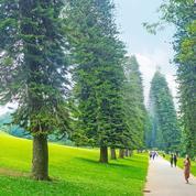 Cet arbre qui ne rêve que de l'équateur