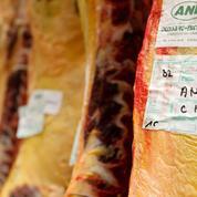 Un vaste réseau européen de trafic de viande de cheval démantelé