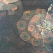 Un robot plonge sous le réacteur n°3 de Fukushima