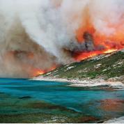 Incendies: désastres écologiques dans le Sud-Est
