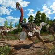 Une nouvelle espèce de dinosaure à tête de casoar découverte