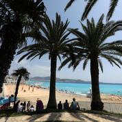 À Nice, un drone pour sauver les palmiers