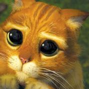 Journée internationale du chat, cette star de cinéma irrésistible
