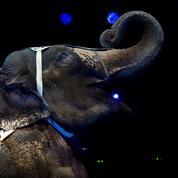 La colère des patrons de cirques avec animaux