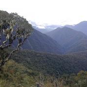 Découverte d'un géant végétal sur un ancien chemin des Incas au Pérou