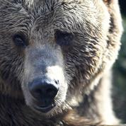 Ariège : un commando armé et encagoulé appelle à «la chasse à l'ours»