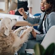 Le chien, animal créateur de bonheur en entreprise