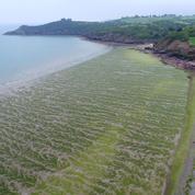 La France peine à régler ses problèmes d'algues vertes