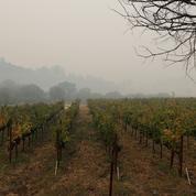 Trois propriétés viticoles détruites par le feu en Californie