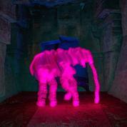 Éléphant, de Martin Suter: la chasse à l'éléphant rose