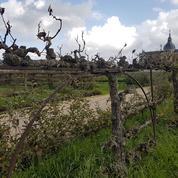 Versailles: des Américains prêts à sauver le Potager du Roi