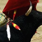 La SPA entre en guerre contre la corrida, et autres «tortionnaires des bêtes»
