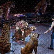 L'Irlande interdit aux cirques de travailler avec des animaux sauvages