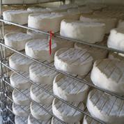 Camembert : la guerre des appellations en passe d'être résolue