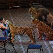 Paris : un tigre s'échappe d'un cirque avant d'être abattu
