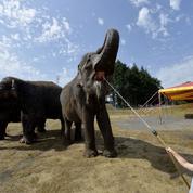 Paris ne veut plus d'animaux sauvages dans les cirques