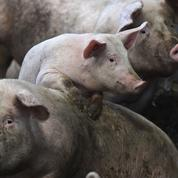«Les militants vegan nous préparent à un monde sans animaux»
